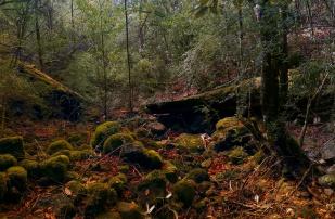 IMAG0369 Panorama