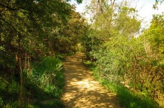 Cornelian Bay Track - heading north