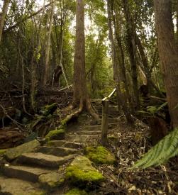 The Fern Glade Track