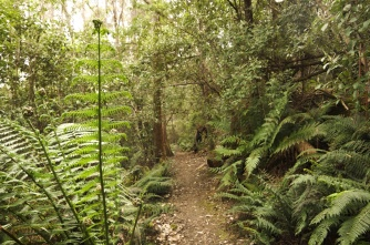 Wellington Park: the Fern Glade Track