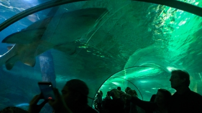 The tunnel of grey nurse sharks and turtles